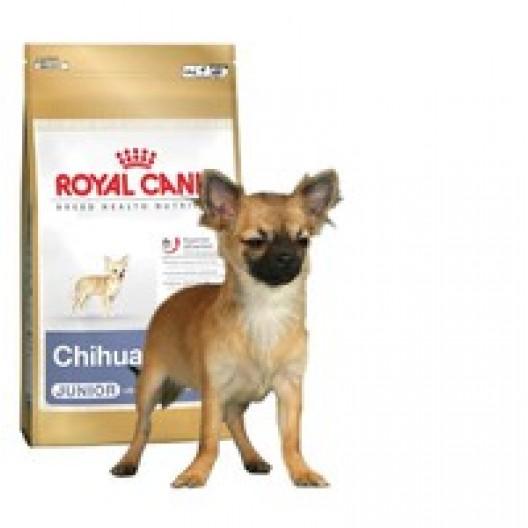 Купить Чихуахуа Юниор 0,5 кг