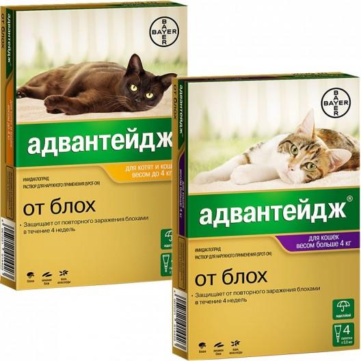 Купить Адвантейдж для котят и кошек до 4 кг